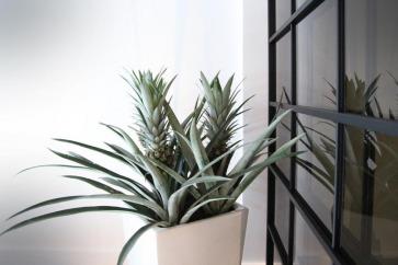 Vasi e oggettistica design per la casa.